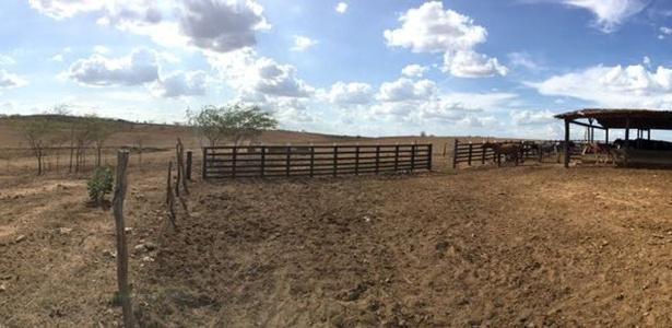 Fazenda de Isaac Pita, em Batalha (AL), sem capim para dar ao gado