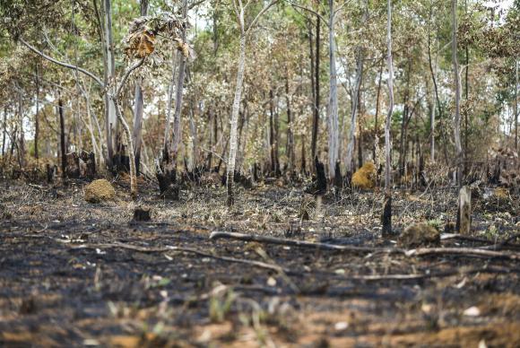 Estudo prevê extinção de um terço de espécies nativas do Cerrado em 30 anos | Agência Brasil - Últimas notícias do Brasil e do mundo