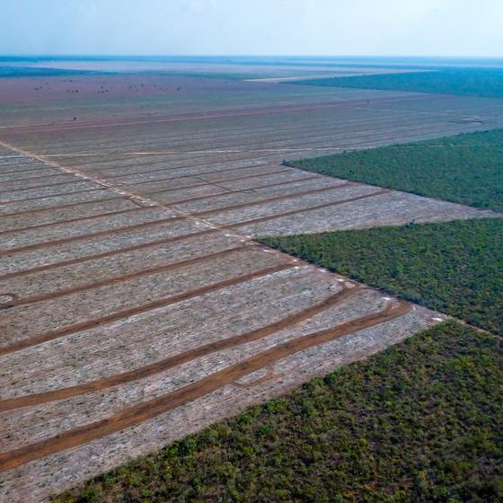 Cerrado brasileiro (Foto: Jim Wickens/Ecostorm)