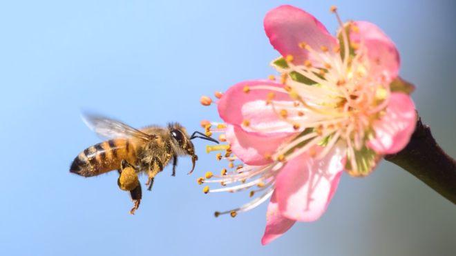 A importância das abelhas na presença de nutrientes nos alimentos é algo recentemente descoberto